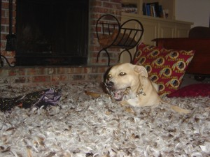 The Feather Pillow Incident