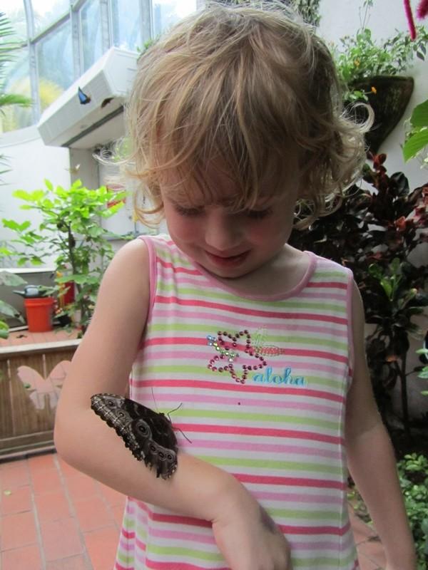 Key West Butterfly