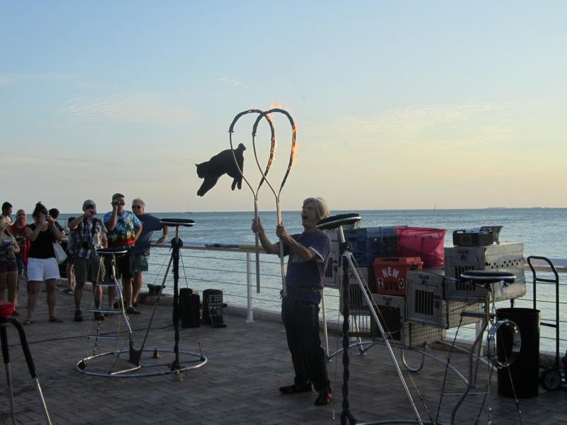 Key West Catman