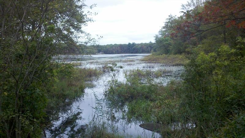 Pond Meadow Park
