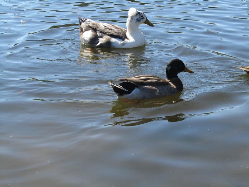 Lake Island Park