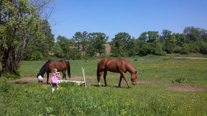 E and the horses