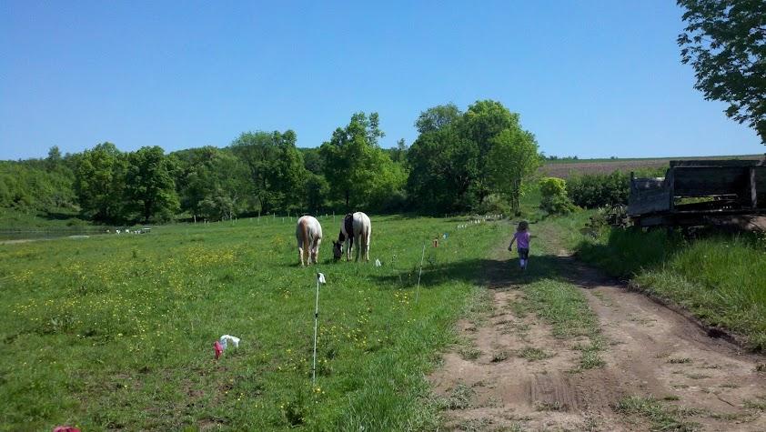 E feeds the horses