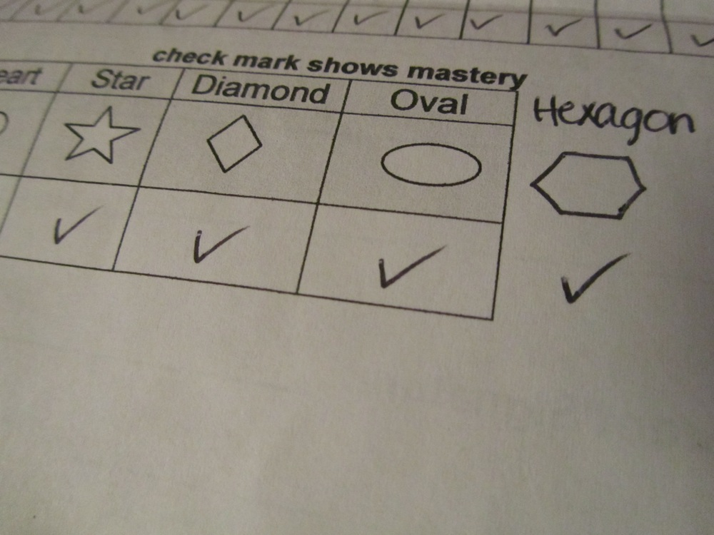 E's report card: shapes