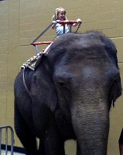 E rides an elephant