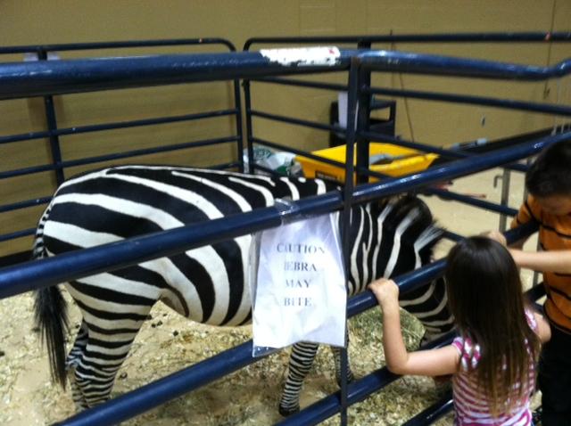 Biting zebra