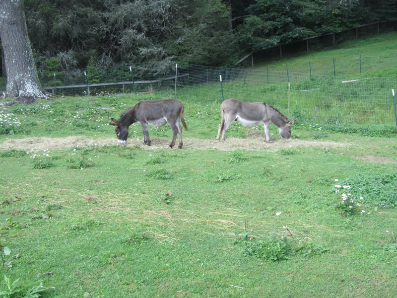 High Hampton Inn donkeys