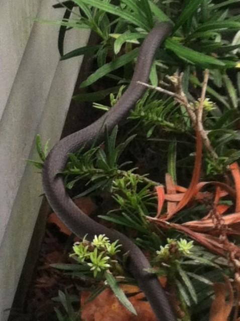 Snake on a bush