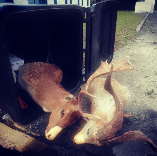 Deer heads in garbage