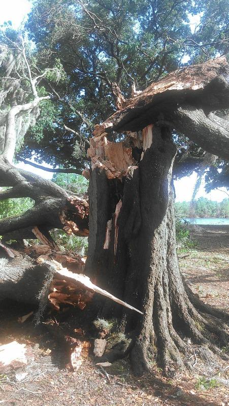 Storm-park tree2
