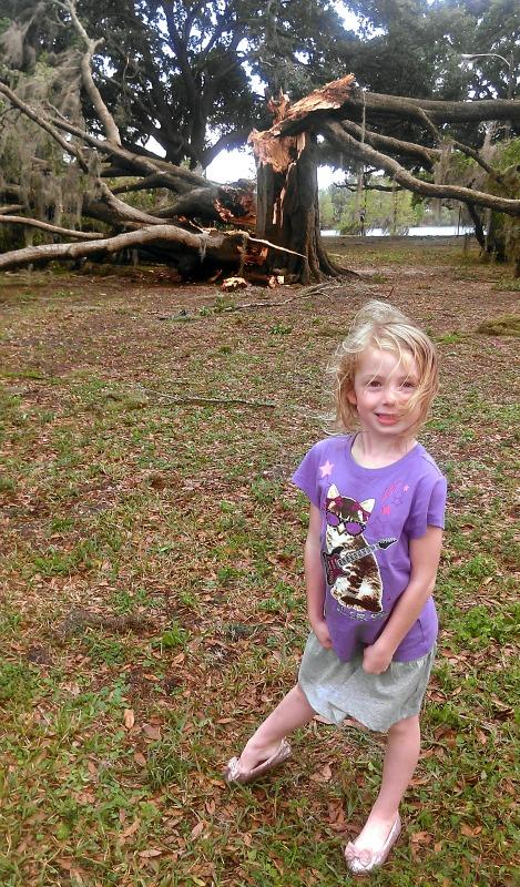 Storm-park tree3