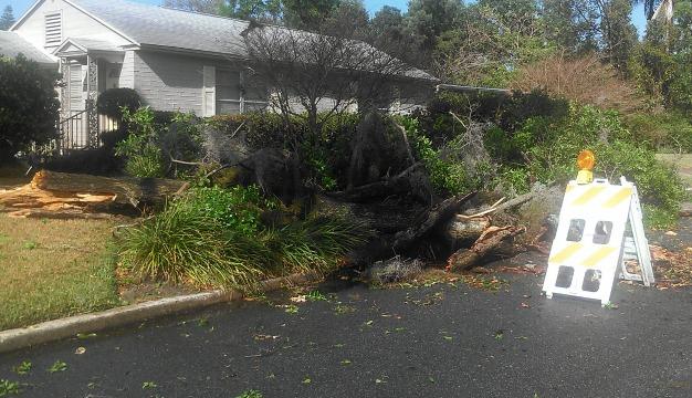 Storm-tree down
