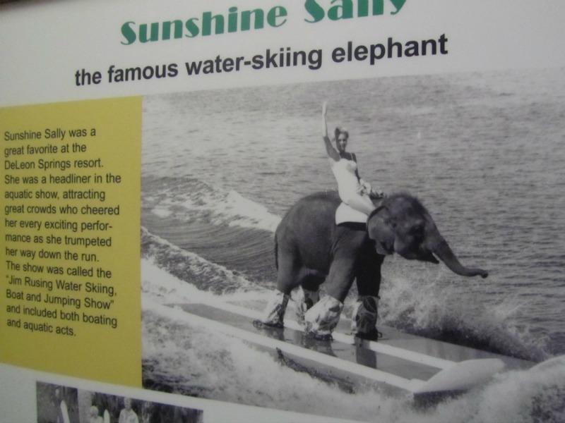 DeLeon elephant