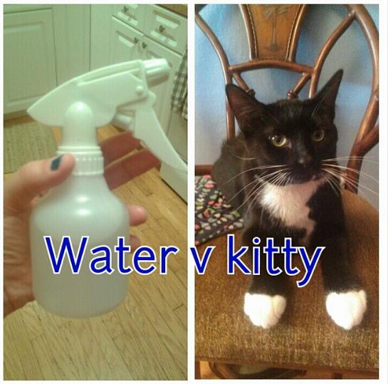 Water v kitty