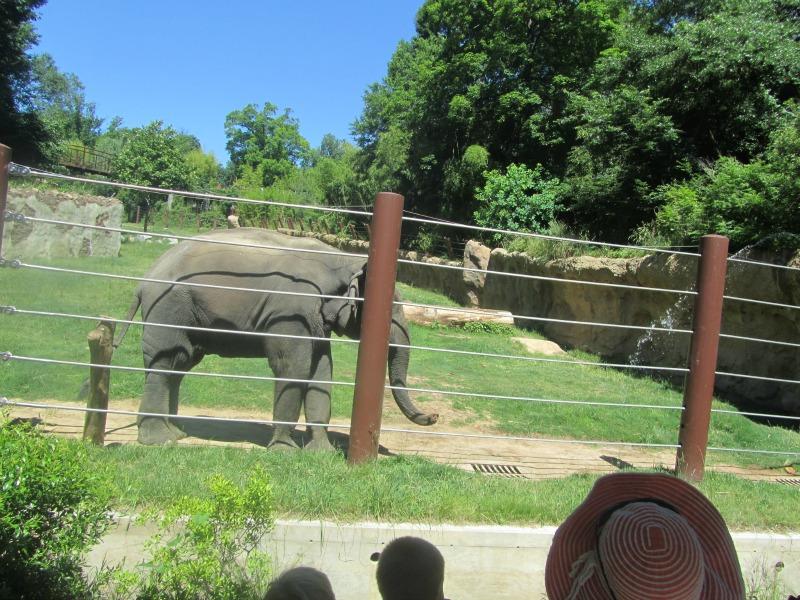 National Zoo: elephant
