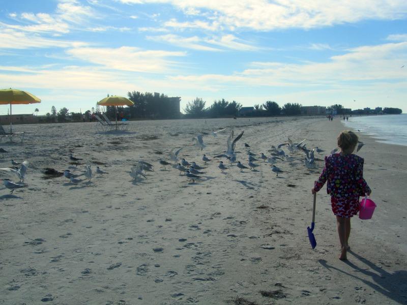 Treasure Island shell hunting: