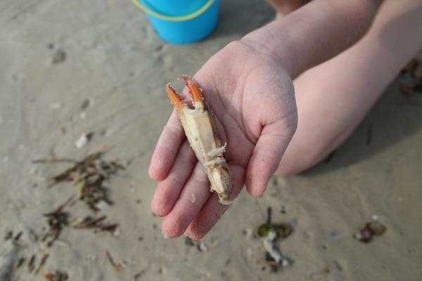 crab leg-beach